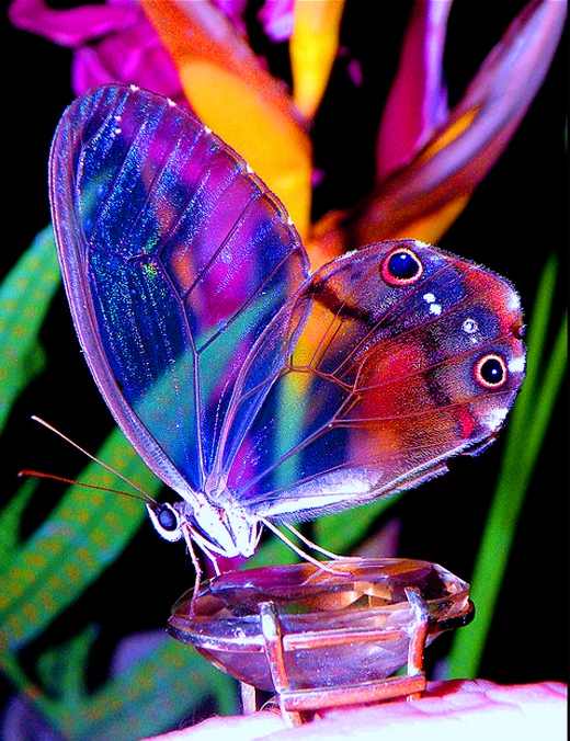 Beautiful ButterFly | 4buzz